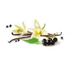 Osvežilec za avto Vanilla & Black Currant - Shake